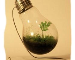 Лампочный креатив ч.2 Террариум из ламп. Мастер