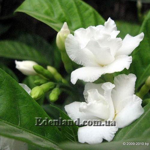 Комнатные растения с красивыми цветками