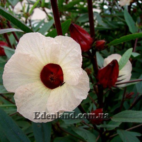 Органические удобрения для комнатных цветов своими руками