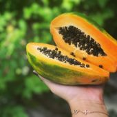 Карика папайя - Carica papaya